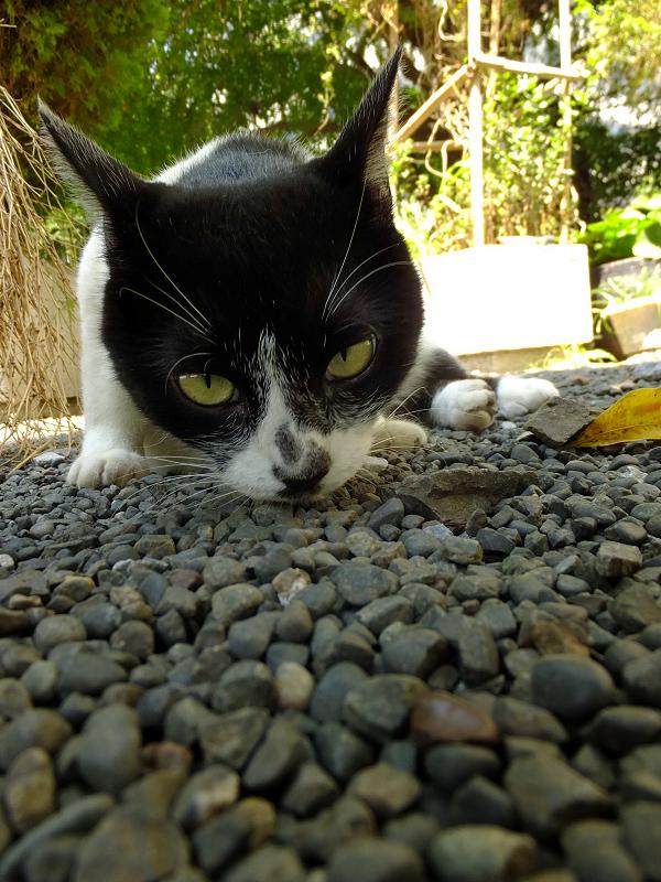 ローアングルで睨むネコ