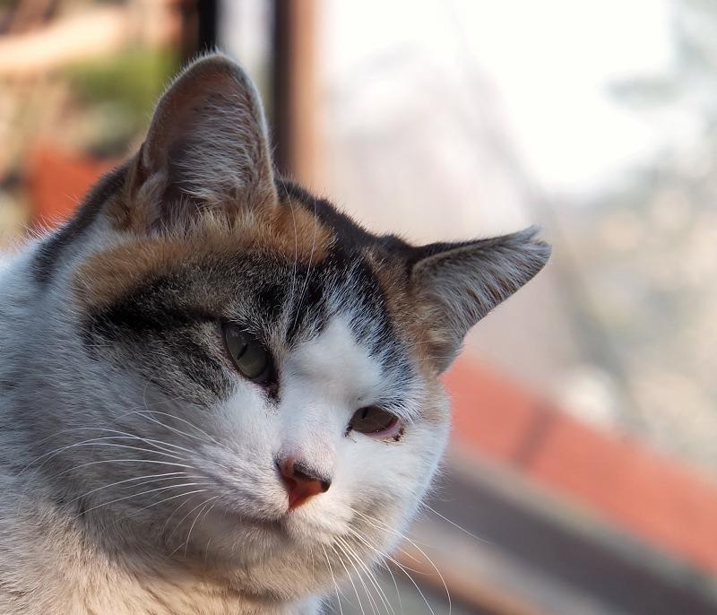 何かを考えてる風のネコ