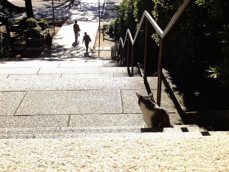 階段の踊り場の仔猫