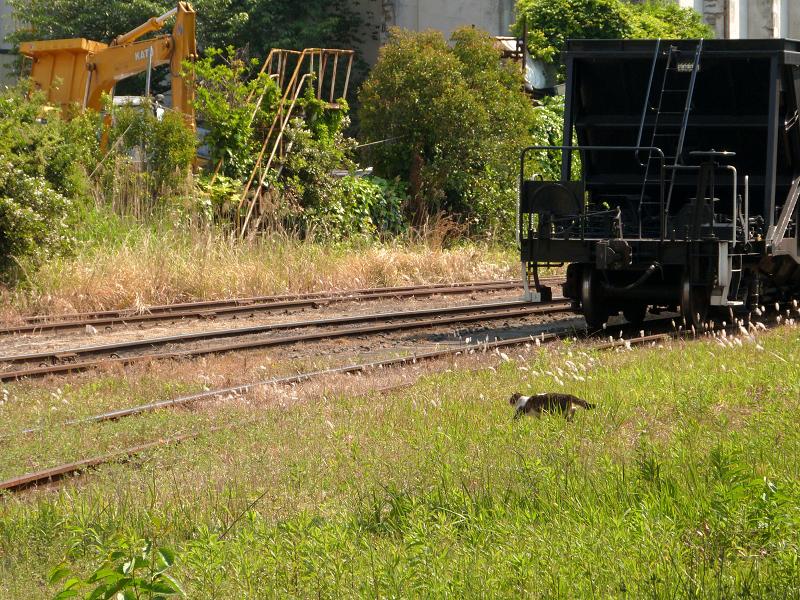 線路を横切るネコ