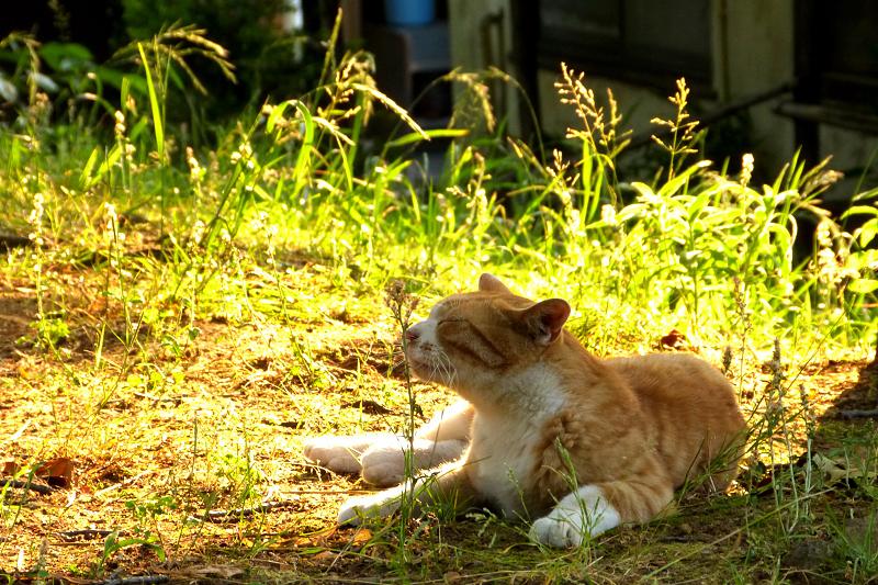 日向のネコ