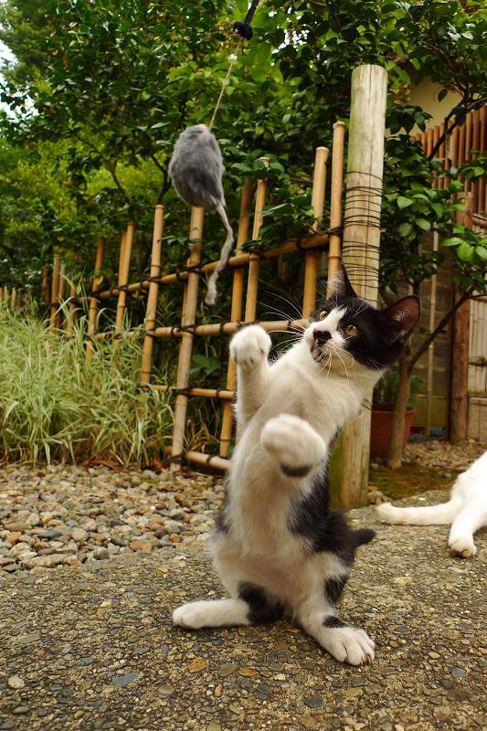 ネズミに向かって立ち上がる仔猫
