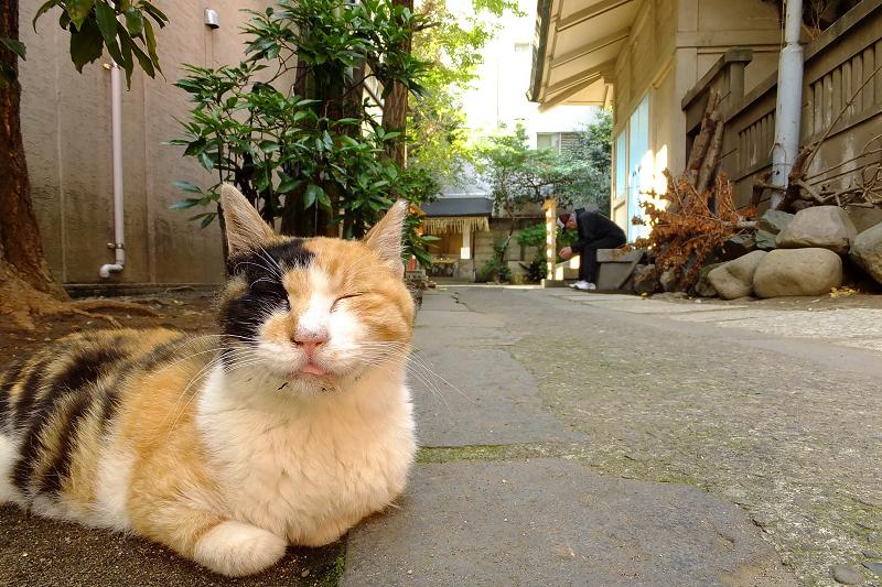 神社の参道の横のネコ