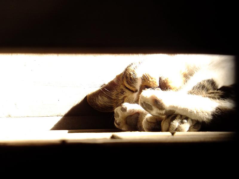 濡れ縁で朝日を浴びて寝てるネコ