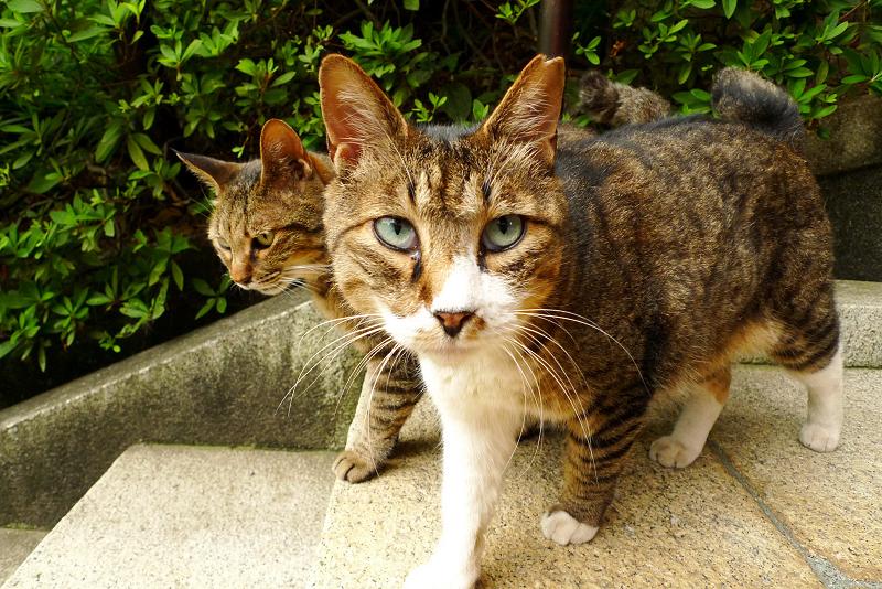2匹同時に出て来るネコ