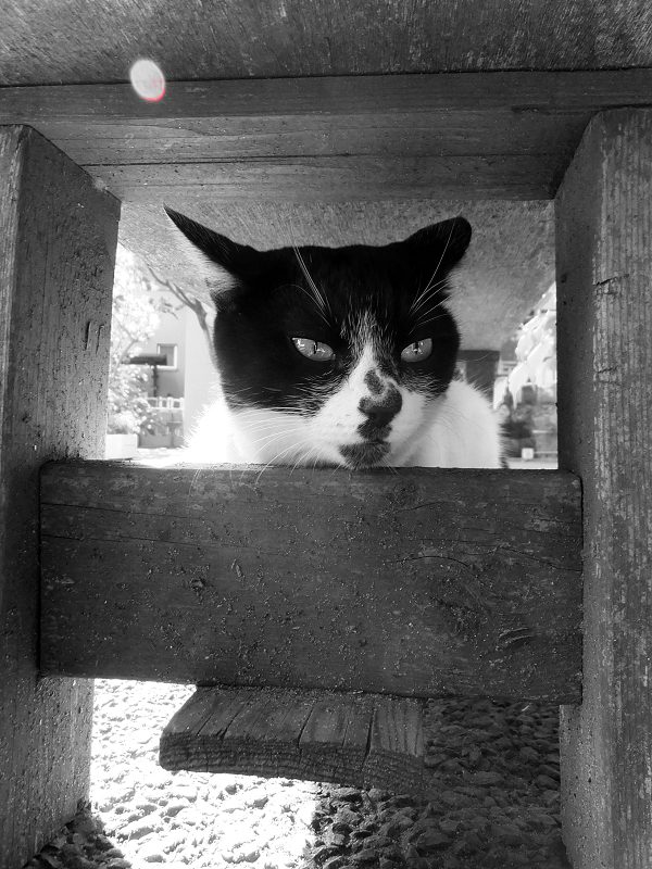 ベンチの下で耳を後ろ向きにしてるネコ