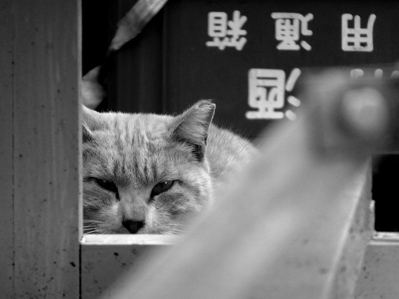 床几の下での睨むネコ