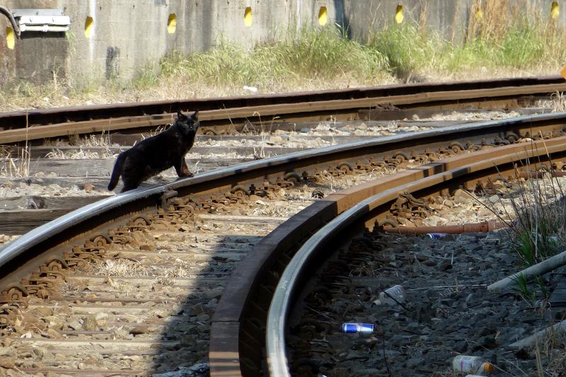 レールに手を乗せるネコ