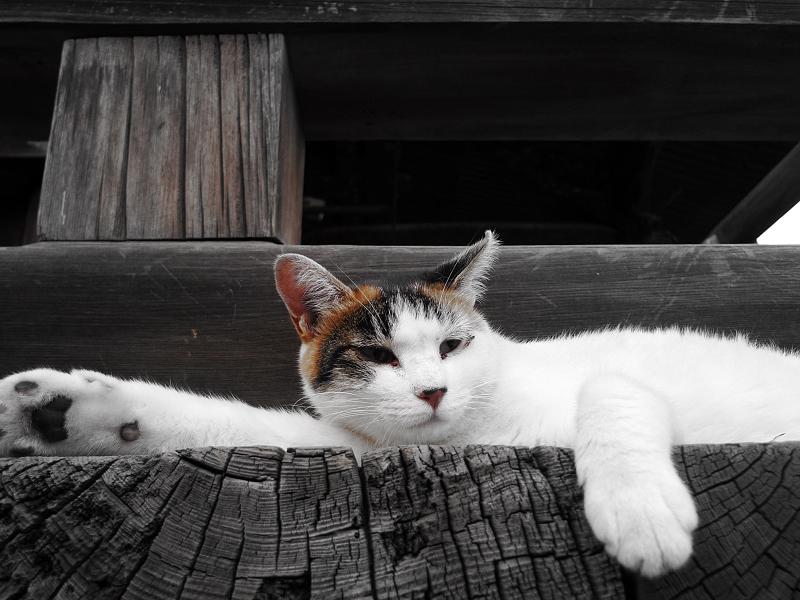廻り縁で伸びてるネコ