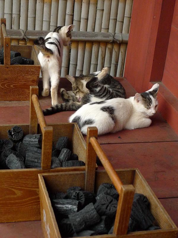 濡れ縁の仔猫たち