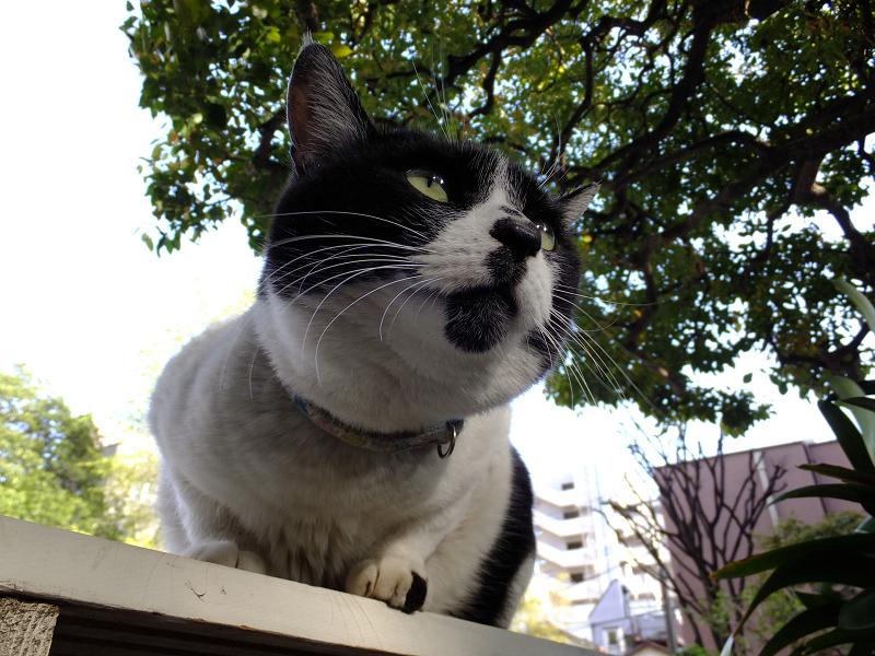 ベンチのネコをローアングルで