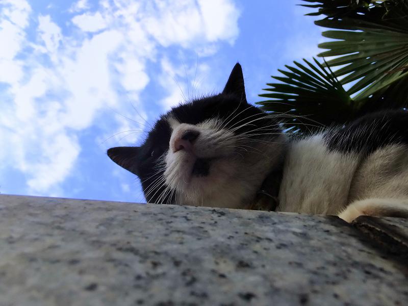 青空と大理石とネコ