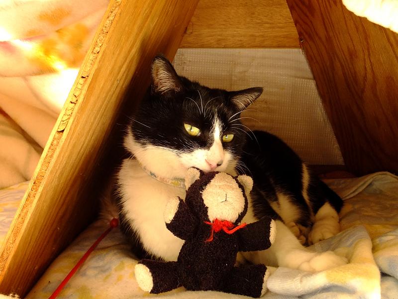 縫いぐるみと同じ柄のネコ