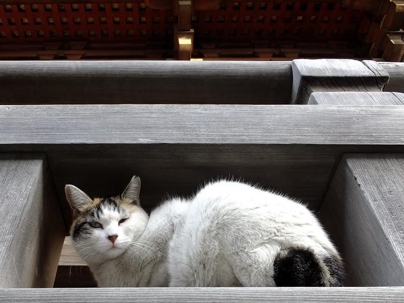 欄干の隙間に座るネコ