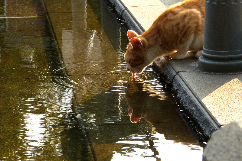 親水公園の水呑みネコ