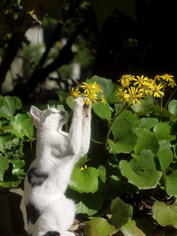 花を摘んでるようにみえるネコ