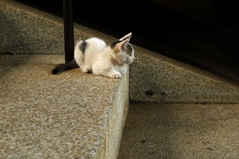 階段から眺めてる仔猫