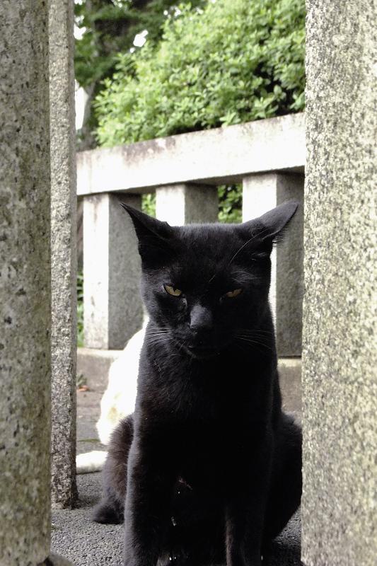玉垣の間から睨む黒ネコ