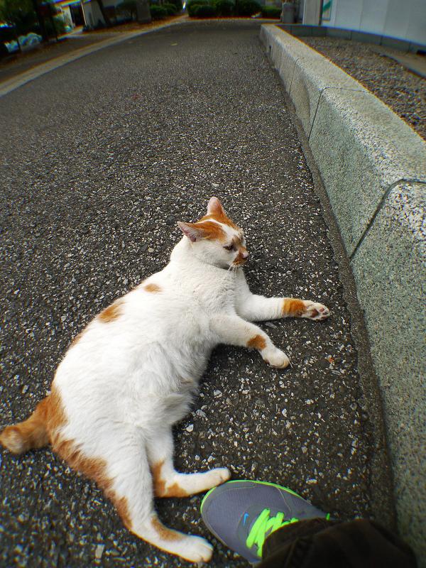 スニーカーに足をくっつけるネコ