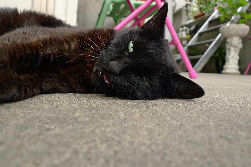 玄関先で横になりベロを出してる黒ネコ