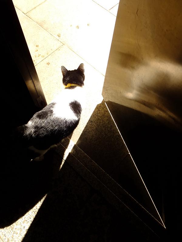 光溢れる外で出るネコ