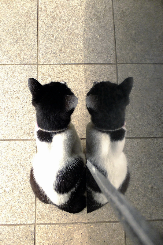黒御影石に映り込んでるネコ
