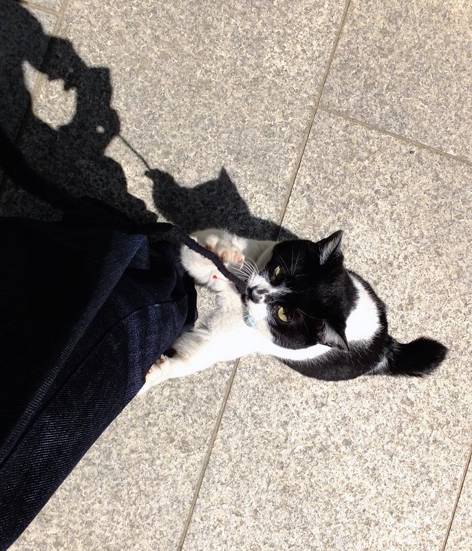 よじ登る勢いのネコ