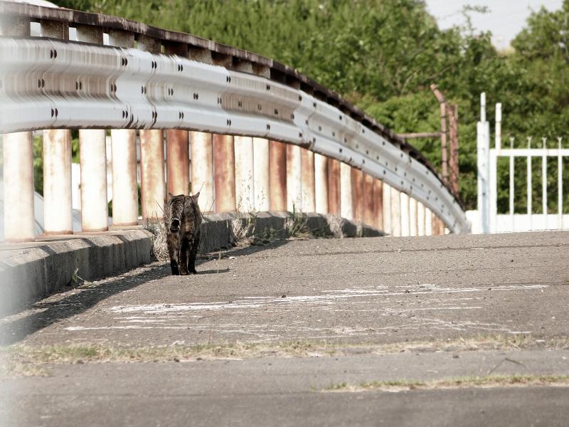 橋を渡るネコ