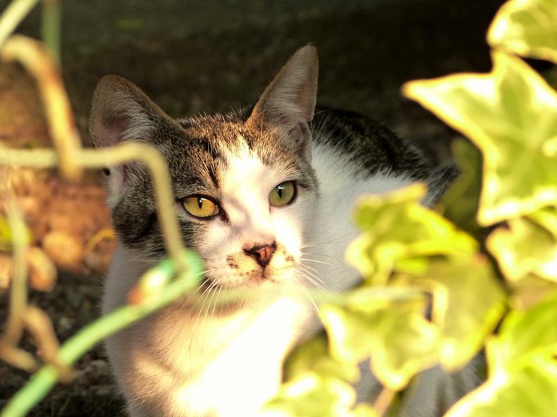 夕日を浴びる金網ネコ