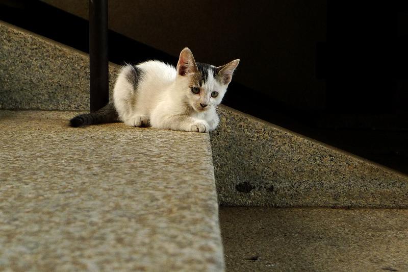 階段で物憂げな仔猫