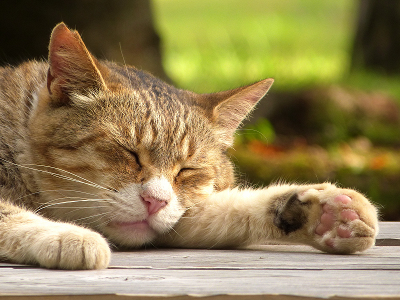 ベンチの上で熟睡したネコ