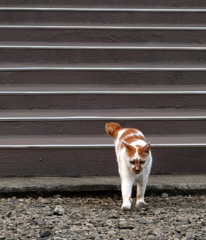 階段を降りてきたネコ