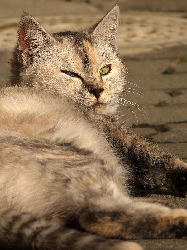 半身で私を見てるネコ