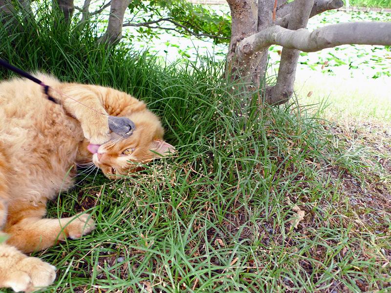 草の上でネズミに夢中になるネコ