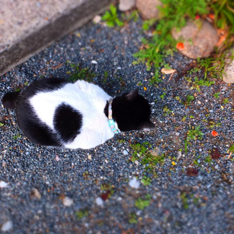 境内のネコ