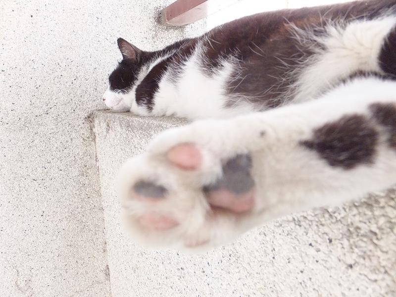 風の通り道で寝てるネコ