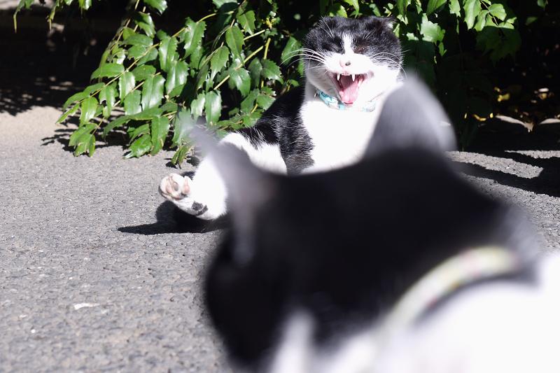 交差するネコ