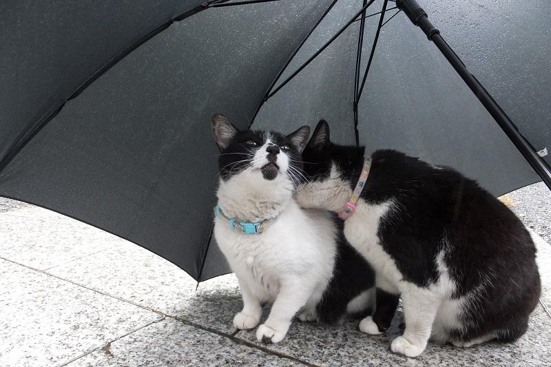 傘の下の2匹のネコ