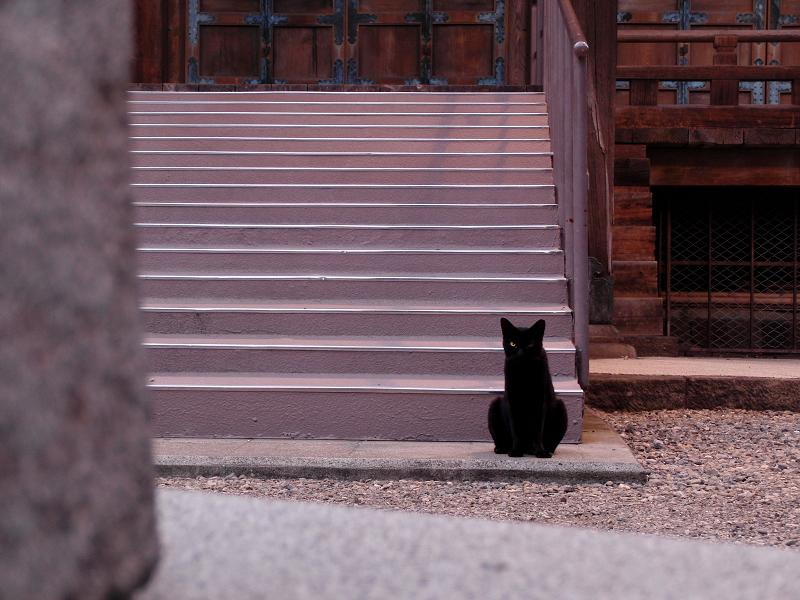 夜のお寺の黒猫
