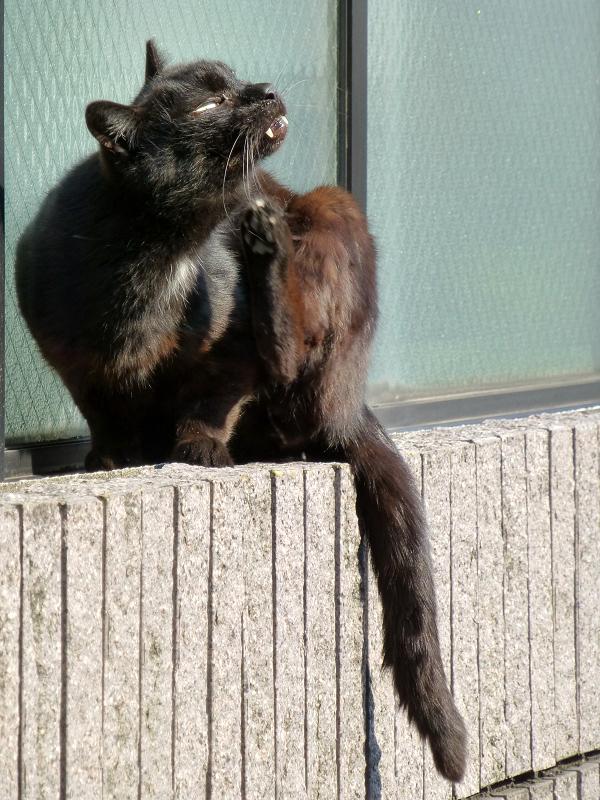 凄い形相のネコ