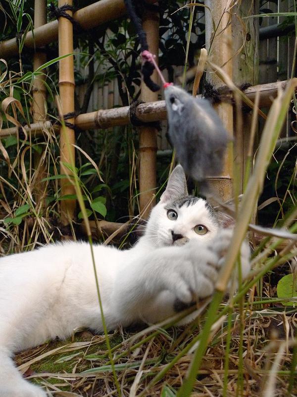 逃げてくネズミを見ているネコ