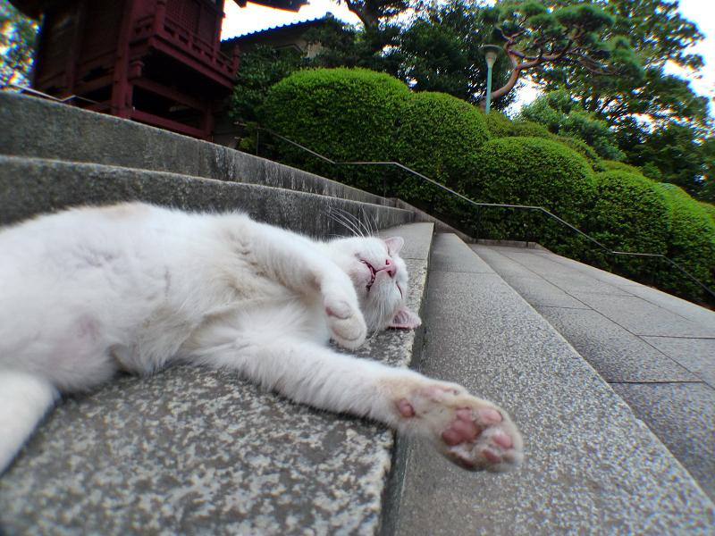 階段で悶絶してるネコ