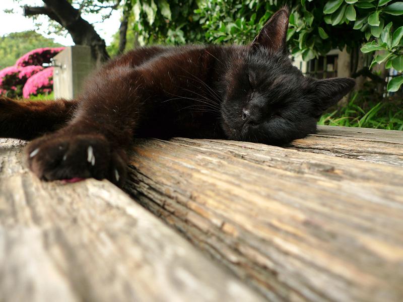 ベンチの上のマッタリ猫
