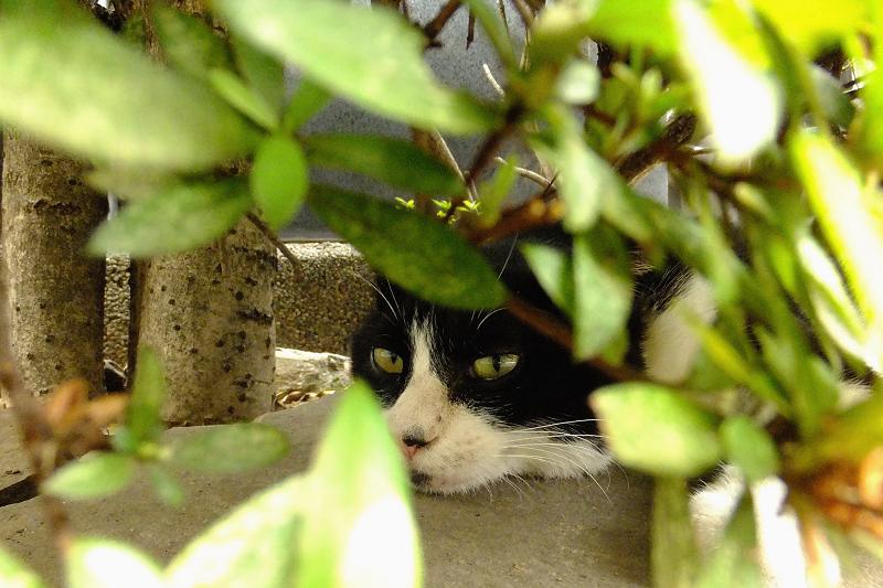 木の葉の影で寝てるネコ
