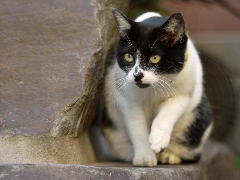 石碑の横で毛繕いを止めるネコ