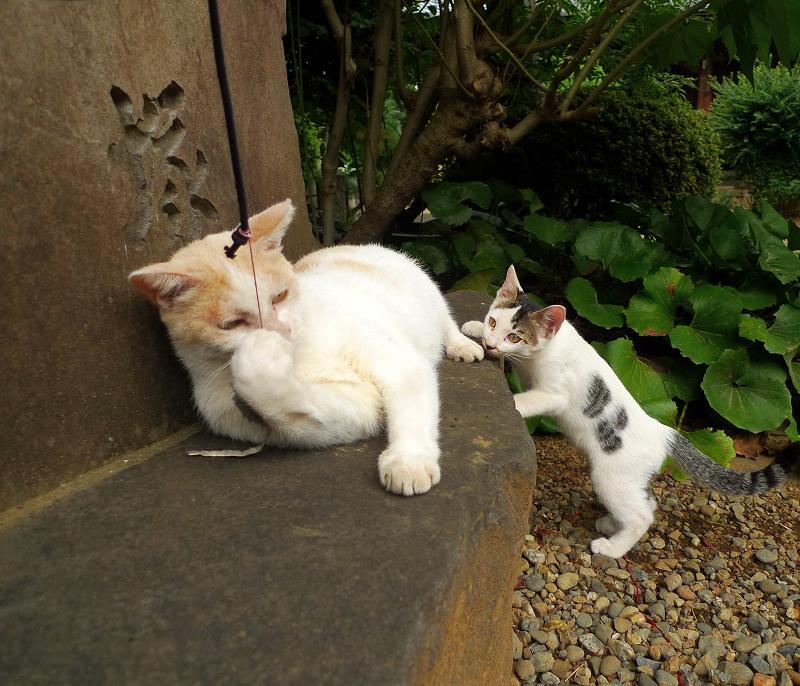 石碑の前で遊ぶ大人ネコと仔猫