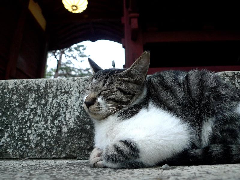 お寺の階段で佇むネコ