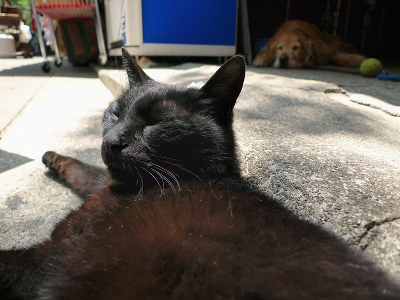 寝てる所を起こされたネコ