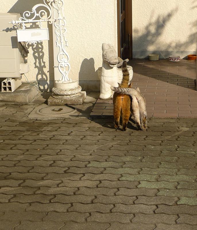 仲良く体をくっつけるネコ