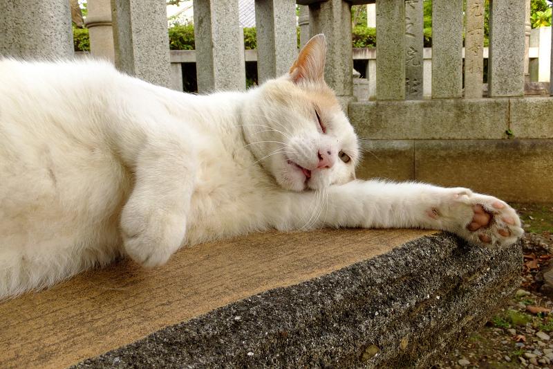 ベンチで横になってるネコ